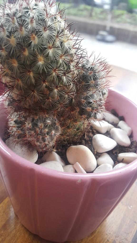 kahve-atelyesi-kaktus